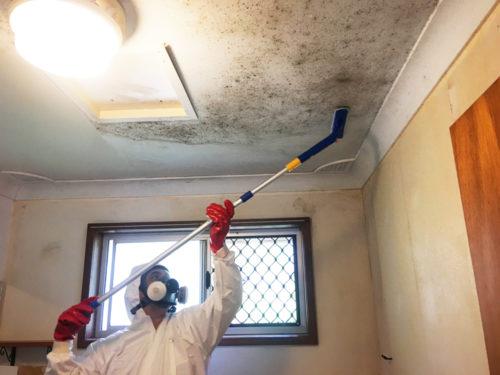 Loại bỏ nấm mốc trên tường sơn dễ dàng nhất hiện nay